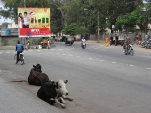 """Cows in the Street Once Again"""